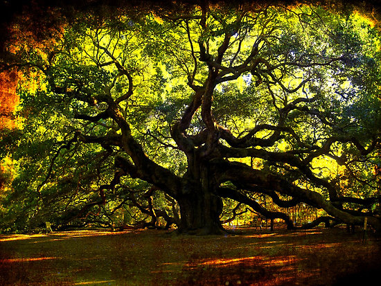 cover-angel-oak