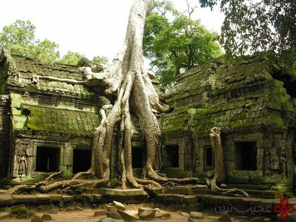 ta-phrom-trees