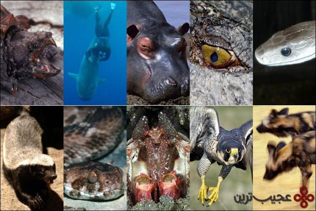 جانور-مرگبار