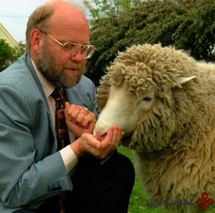 دالى گوسفند زاده شده