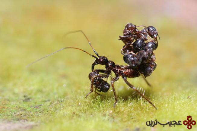 عنکبوت-قاتل