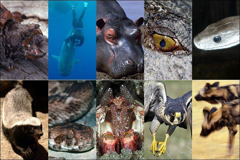 عکس-کاور-جانور-مرگبار
