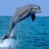عکس-کاور-دلفین