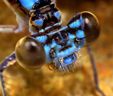 ۱۰ تا از جالبترین حشرات دنیا!