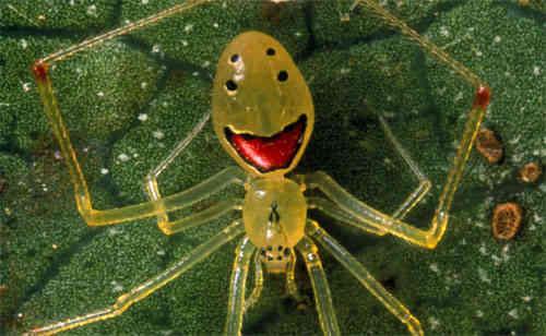 عکس-کاور-عنکبوت-خندهرو