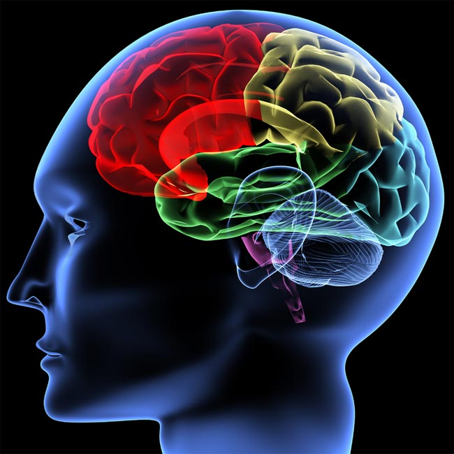 ۱۰ واقعیت عجیبی که درباره مغز نمیدانید!