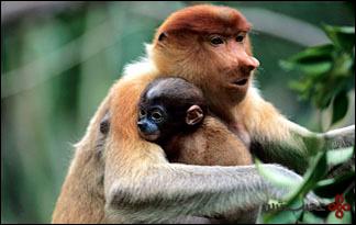 میمون-پوزهدار