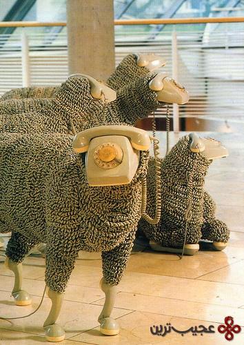 گوسفند (1)