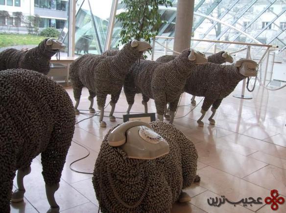 گوسفند (10)