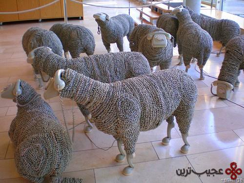 گوسفند (2)