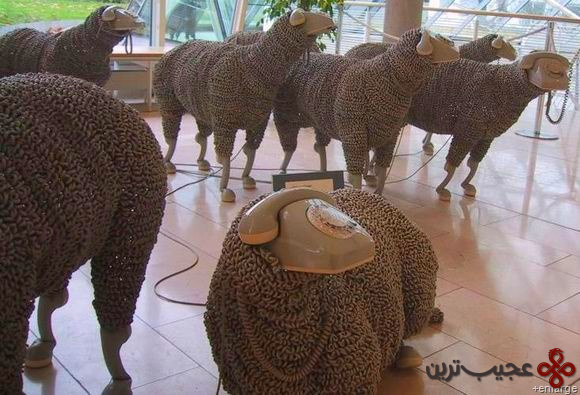 گوسفند (3)