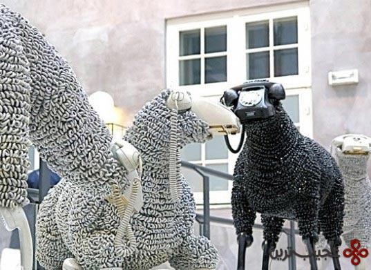 گوسفند (4)