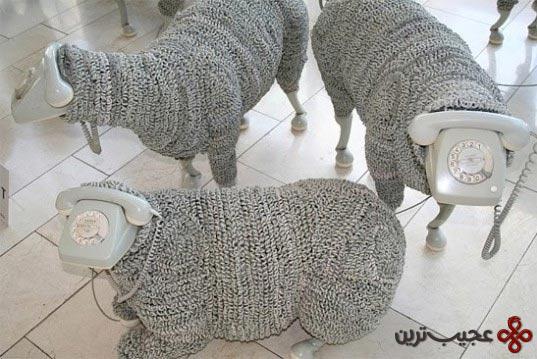 گوسفند (6)