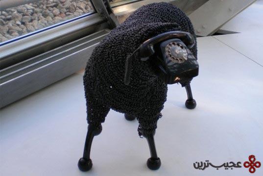 گوسفند (7)
