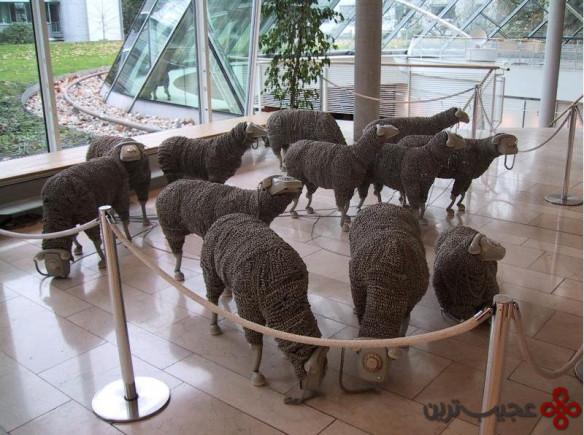 گوسفند (9)