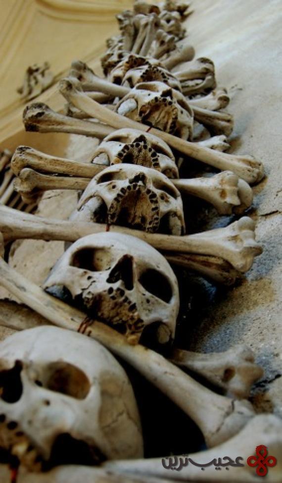 Bone14