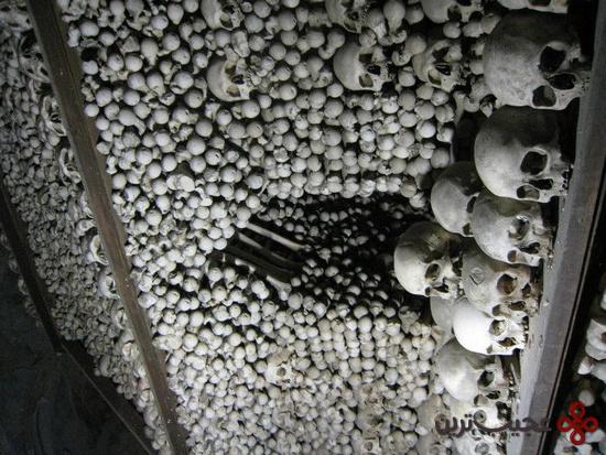 Bone15