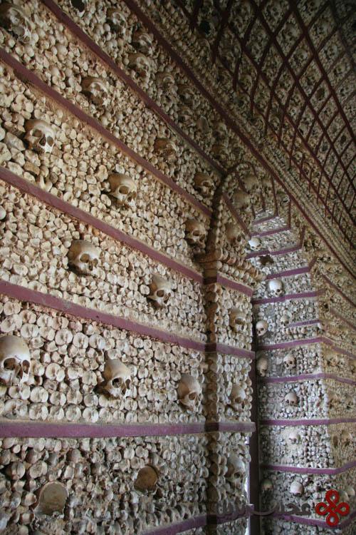 Bone16