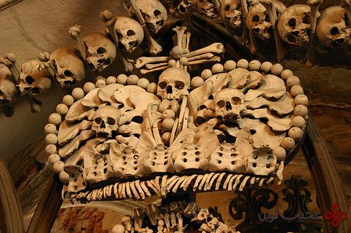 Bone19