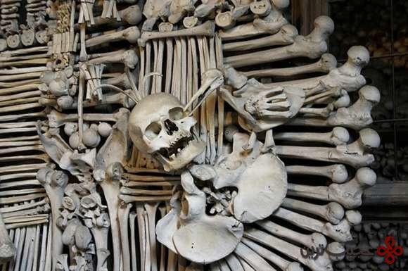 Bone4