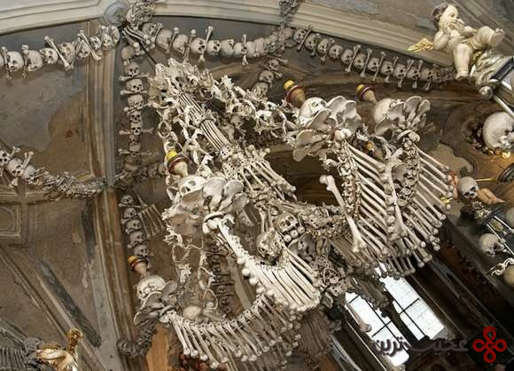 Bone5