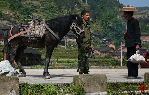 chinese-horse
