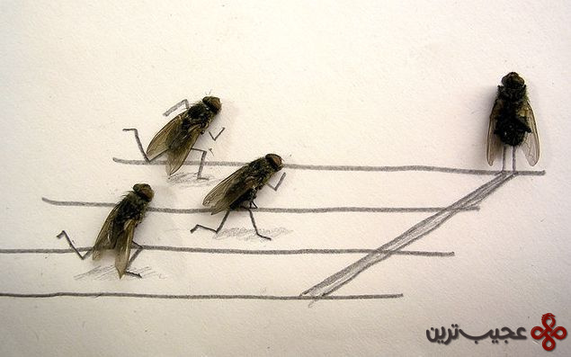 dead_flies_art_01