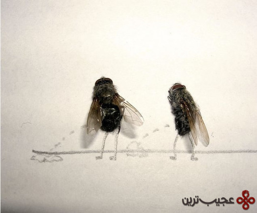 dead_flies_art_02