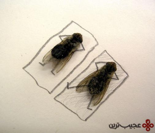 dead_flies_art_03