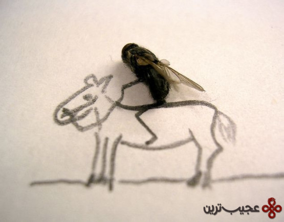 dead_flies_art_04