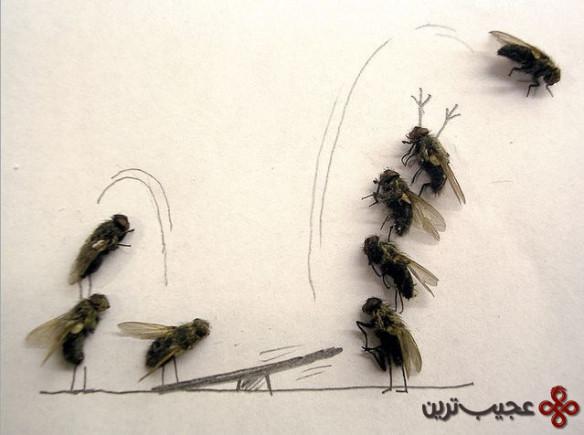 dead_flies_art_05
