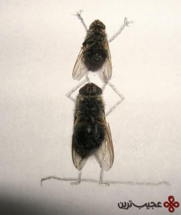 dead_flies_art_12