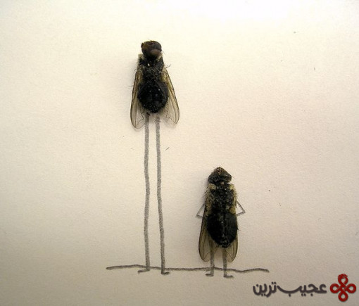 dead_flies_art_14