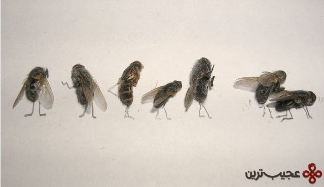 dead_flies_art_15