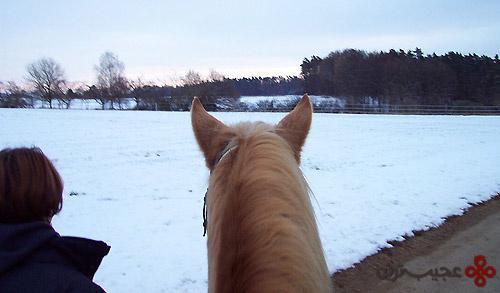 horse-mane