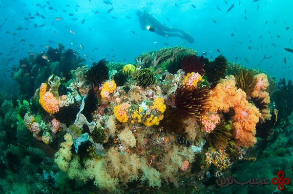 new-7-wonders-nature-komodo-indonesia