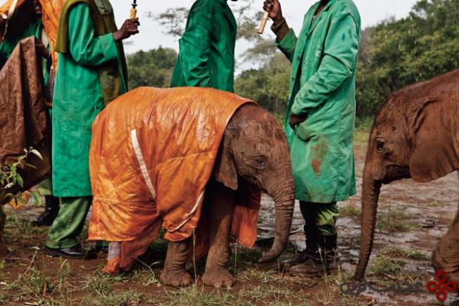 orphan-elephant-nichols