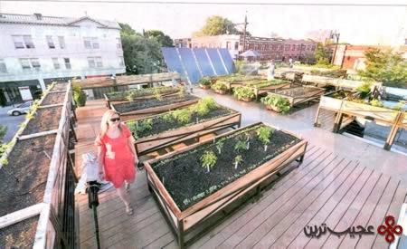 rooftop_3-farm