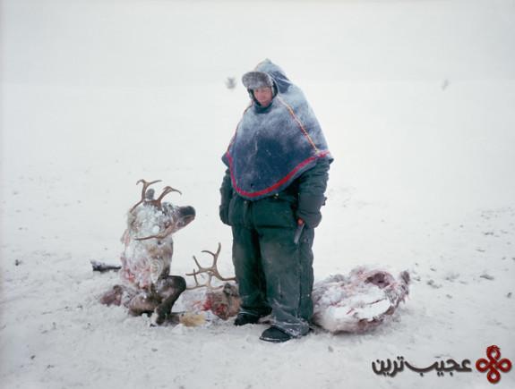 sami-reindeer-larsen