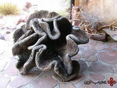 welwitschia-mirabilis-2