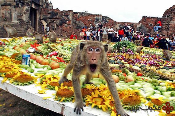 بزرگداشت میمون