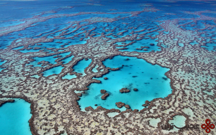 colours of the great barrier reef