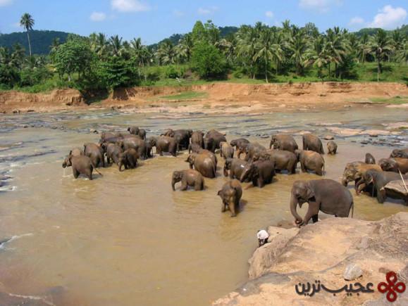 سریلانکا (2)