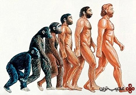 عامل تکامل