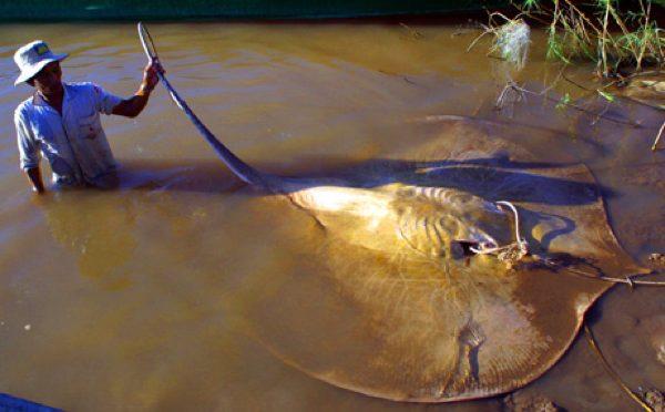 عکس کاور سفره ماهی آسیایی