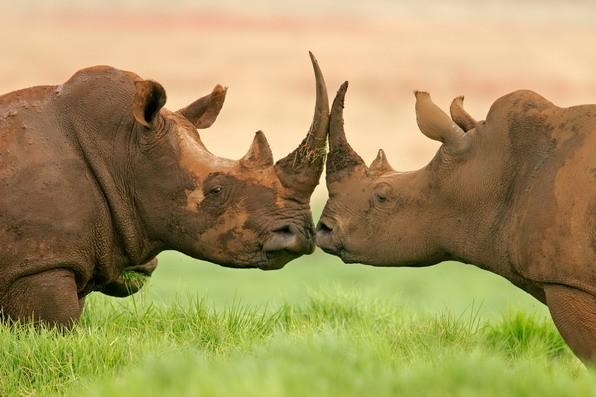 عکس کاور منطقه برتر حیات وحش