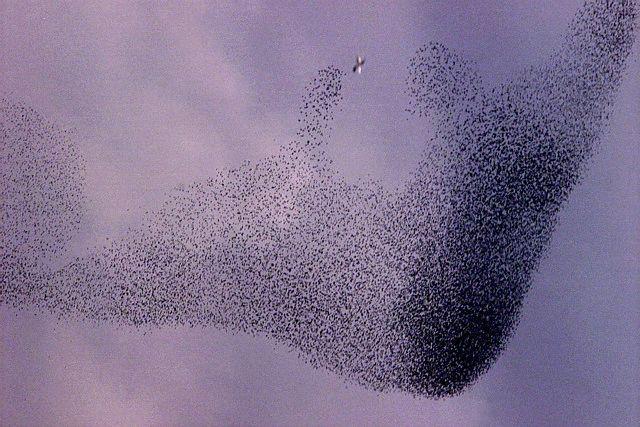 عکس کاور پرندگان