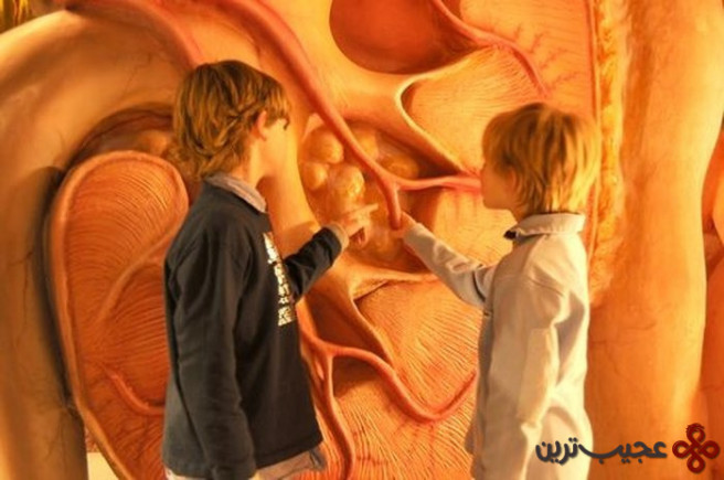موزه انسان (5)