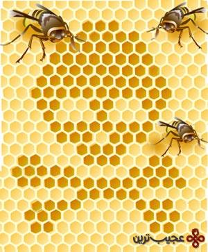 نابودی نسل زنبورها