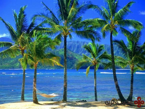 هاوایی (1)